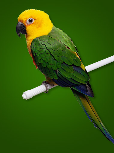 bird_product_category2