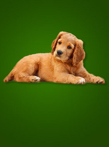 dog_product_category1