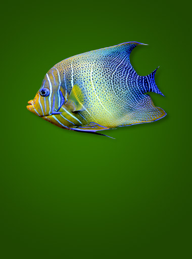 fish_product_category1