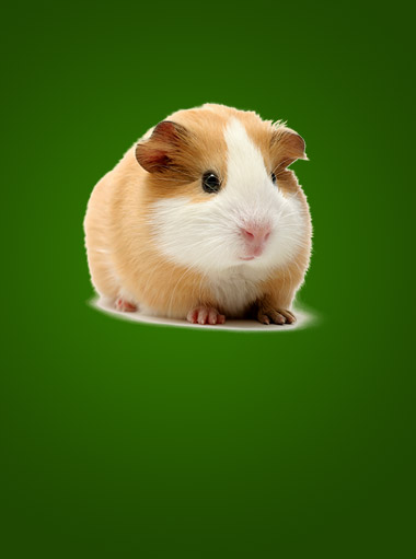 rodent_product_category1